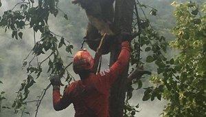 Ağaçta mahsur kalan ayı böyle kurtarıldı