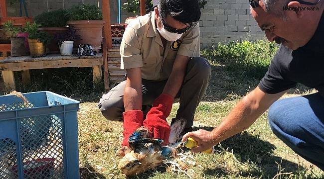 Aksaray'da yaralı bulunan kızıl başlı şahin tedavi altına alındı