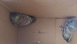 Bacada mahsur kalan yavru baykuşları itfaiye kurtardı