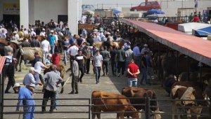 Bayburt'ta Kurban Bayramı heyecanı