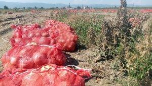 Binlerce dönüm soğan bedava dağıtıldı