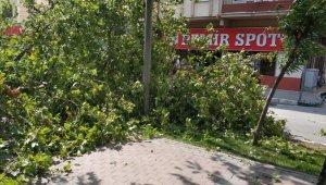 Bursa'da tarihi çınar devrildi