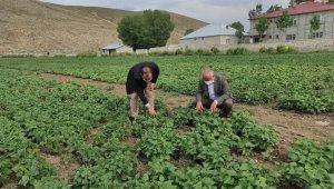 Çaldıran'da bitkisel ürün çeşitliliğinin arttırılmasına yönelik proje çalışması