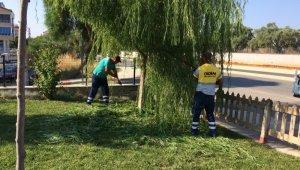 Didim Belediyesi yeşil alanlarda temizliğe devam ediyor