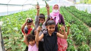 Edremit'te çiftçiye sağlanan destek meyvelerini verdi