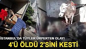 İstanbul'da tüyler ürperten olay! 4'ü öldü, 2'sini kesti