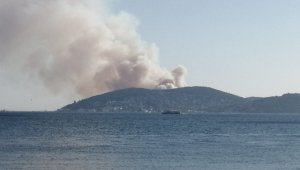 İstanbul Heybeliada'da orman yangını çıktı
