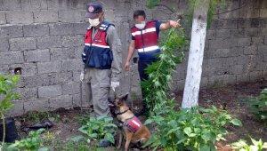 Jandarmadan dronlu uyuşturucu operasyonu