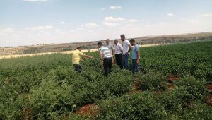 Kahta'daki sebze üreticileri bilgilendiriliyor