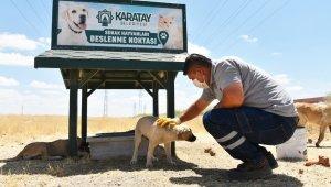 Karatay Belediyesi, sokak hayvanlarını yalnız bırakmıyor