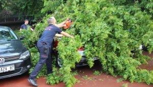 Kocaeli'de fırtınanın devirdiği ağaç, otomobillere zarar verdi