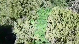 Ormanlık alana 'drone'lu kenevir operasyonu