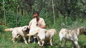 Türkiye'de koronavirüs hayvanseverleri Labrador ve Poodle cinsine yöneltti