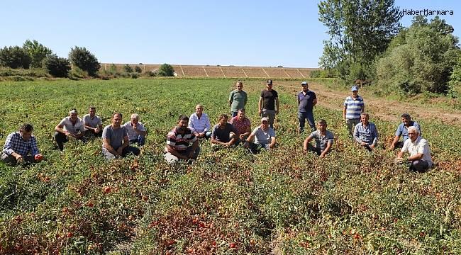 4 kilo domatese köy kahvesinde 1 bardak çay içen üretici isyan etti