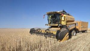 Ahlat'ta 70 bin ton buğday hasadı bekleniyor