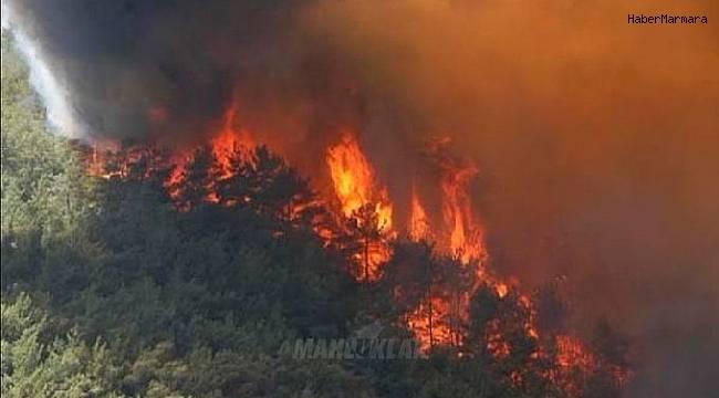 Bulgaristan'daki 2 orman yangını birleşti