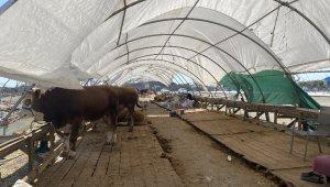 Kurban çadırları bir yandan toplanırken, bir yandan pazarlıklar sürüyor