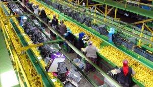 Limon ihracatında çiftçiyi sevindiren karar
