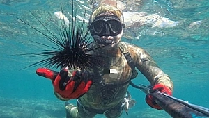 Uzmanından  'Uzun Dikenli Zehirli Deniz Kestanesi' Uyarısı