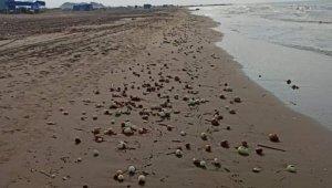 Yüzlerce kilo soğan Karataş sahiline vurdu