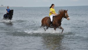 Atlara denizde özel idman