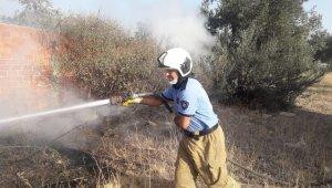 Burhaniye'de ot yangını zeytin ağaçlarına zarar verdi