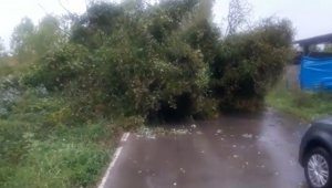 Fırtınada ağaç devrildi yol ulaşıma kapandı
