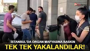 İstanbul'da organ mafyasına operasyon!