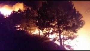 İzmir'deki orman yangını sonrası ağır bilanço: Onlarca hektar ormanlık alan küle döndü