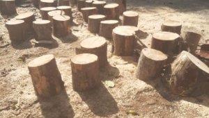 Orman emvali kaçakçılarına jandarma darbesi