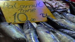 Palamut balığı 10 liraya geriledi