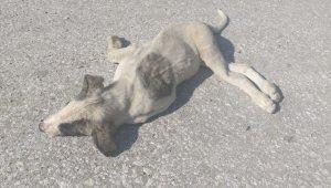 Aracın çarptığı köpek telef oldu