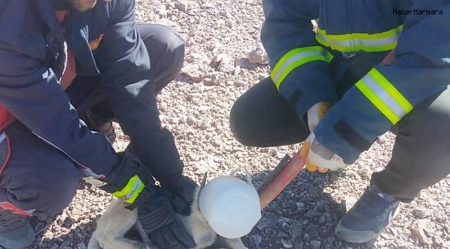 Başı plastik bidona sıkışan köpek itfaiye rafından kurtarıldı
