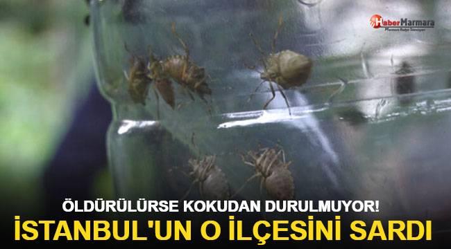 İstanbul'un o ilçesini sardı! Öldürülürse kokudan durulmuyor