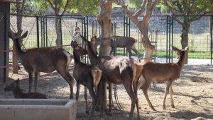 Malatya Hayvanat Bahçesi 7 ay sonra kapılarını yeniden açtı