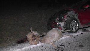 Otomobil sürüye daldı, 10 koyun telef oldu