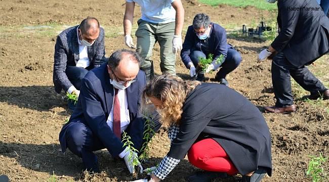 Tıbbi ve aromatik bitkiler toprakla buluştu