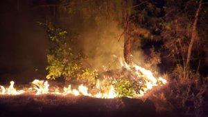 Yangın 500 metrekarelik ormanlık alana zarar verdi