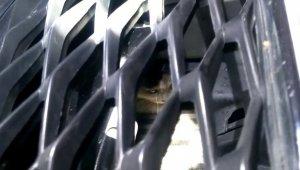 Yaramaz kedi için itfaiye ekipleri seferber oldu