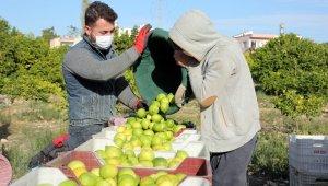 Tescilli Lamas limonu hasadı bereket duası ile başladı