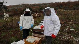 """Arı kolonisinde """"varroa"""" hastalığı tespit edilen üreticinin arıları kurtarıldı"""