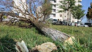 Diyarbakır'da ağaç katliamına site sakinlerinden tepki