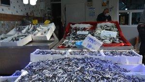 Sinop'ta balık çok, alan yok