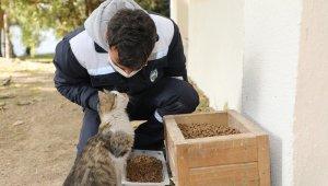 Talas'ta sokak hayvanlarını özel ekip besliyor