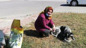 Yenişehirliler köpeklerin canlı canlı ölüme terk edilmesine isyan etti