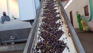 Zeytin bahçeleri tarıma dayalı sanayiyi geliştiriyor
