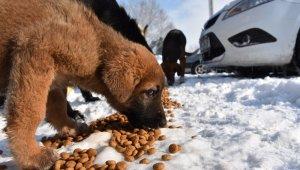 Erenler Belediyesi karlı havada sokak hayvanlarını unutmadı