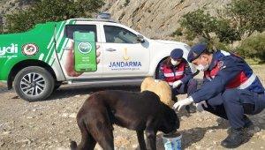 Jandarma ekipleri kısıtlama günlerinde sokak hayvanlarını unutmadı