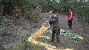 Pazar alanından toplanan atıl yeşillik ve meyveler yaban hayvanları için doğaya bırakıldı