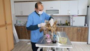 Seydikemer Belediyesi hasta köpeğe sahip çıktı